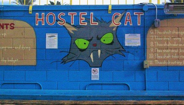 Hostal  Cat