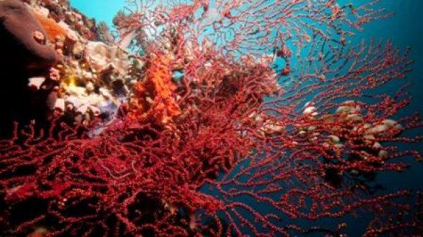 Wellbeach Dive Resort