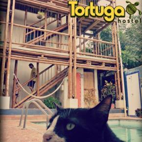 Hostales y Albergues - Hostal La Tortuga