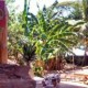 Hostal Kokua  Santa Teresa