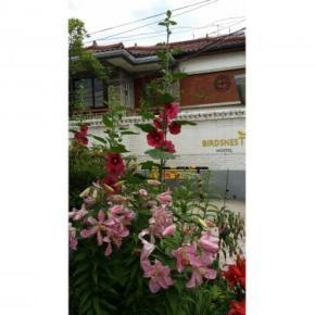 Hostales y Albergues - Hostal Birdsnest  Hongdae
