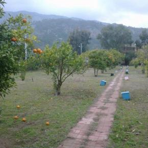 Hostales y Albergues - Cafe Camping Cirali