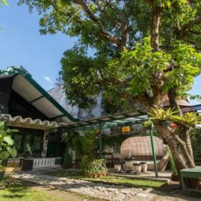 Hostales y Albergues - Mango Tree Dipudjo Homestay