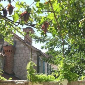 Hostales y Albergues - Hostal  Split Garden